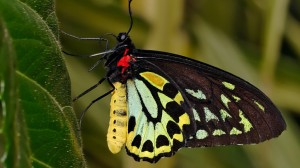 Black-Yelllow-Beautiful-Butterflies-1024x576
