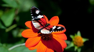 fantastic-butterfly-hd-wallpapers-cool-desktop-photos-full